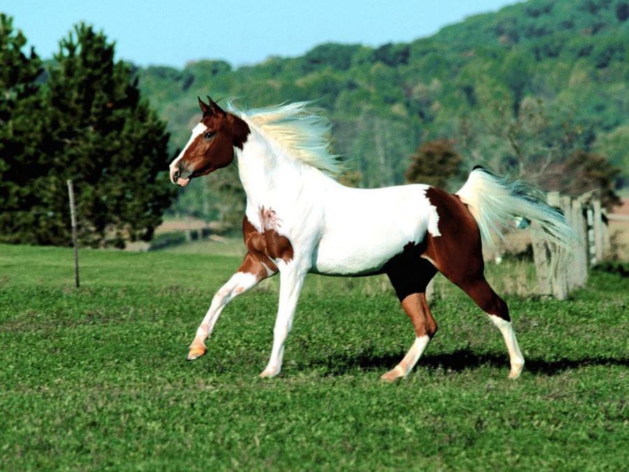 Fotos de caballos blanco