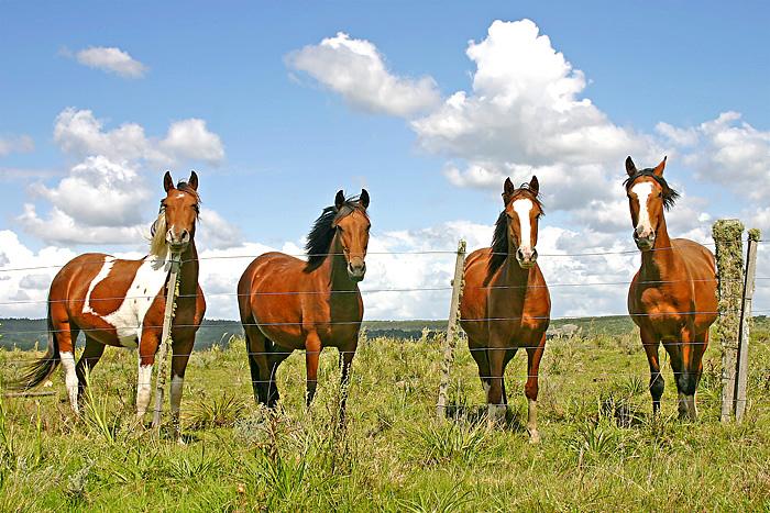 Fotos de caballos
