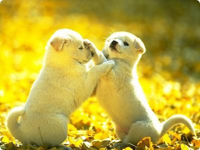 Imagenes bien bonitas cachorros