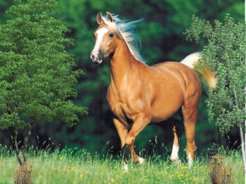 Imagenes caballos