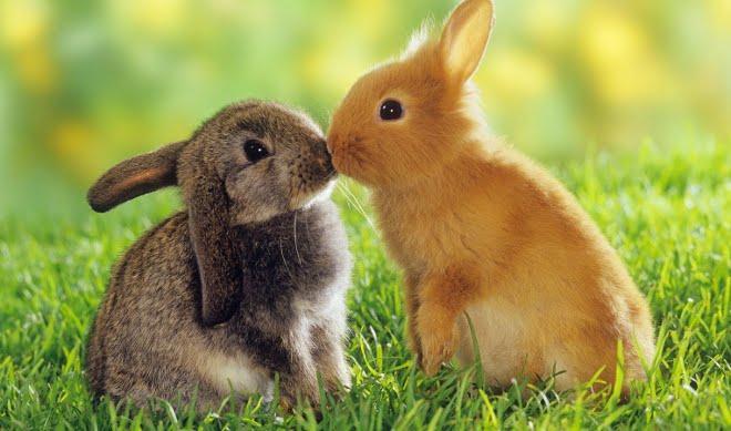 Imagenes de animales conejos