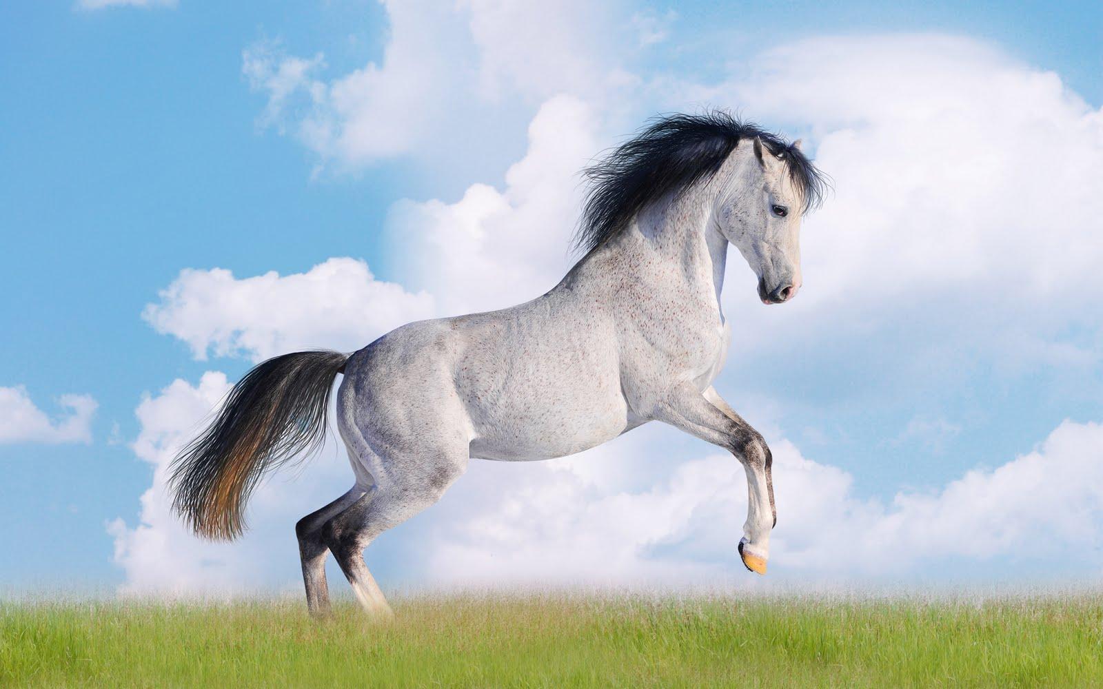 Imagenes de caballos blanco