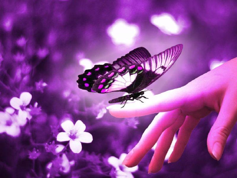 Imagenes de mariposas purpura