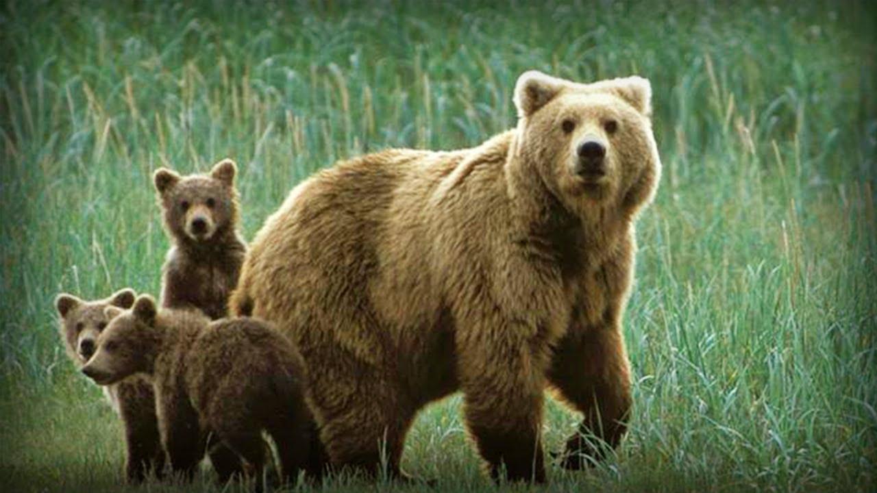 Imagenes de osos familia