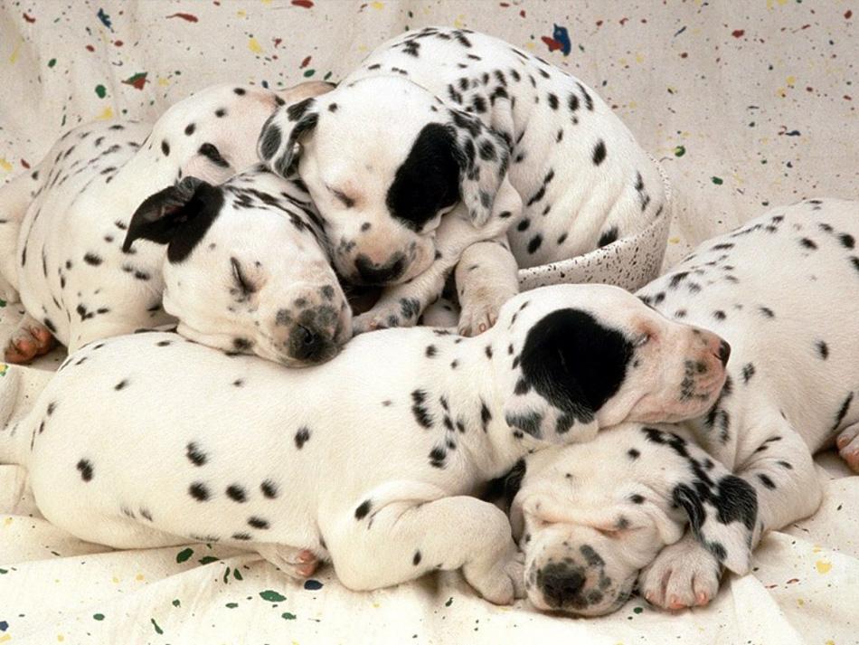 Imagenes de perros raza