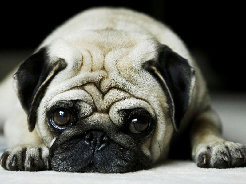 Imagenes de perros tierno