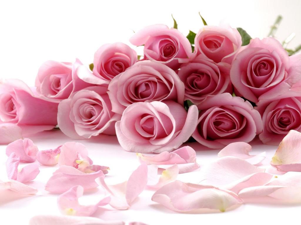 Imagenes rosas