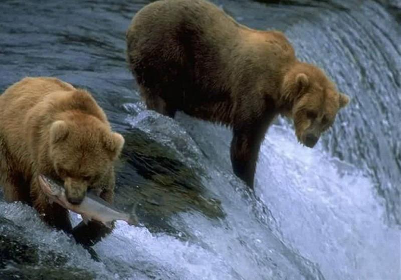 Imagenes sorprendentes animales